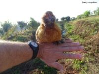 Vogels in de natuur